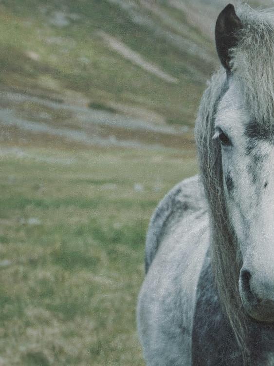 Umělecká fotografie faded horse