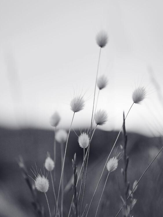 Fotografia artystyczna Field Grass