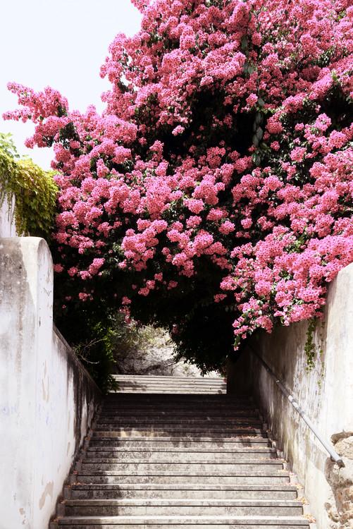 Umělecká fotografie Flowery Staircase