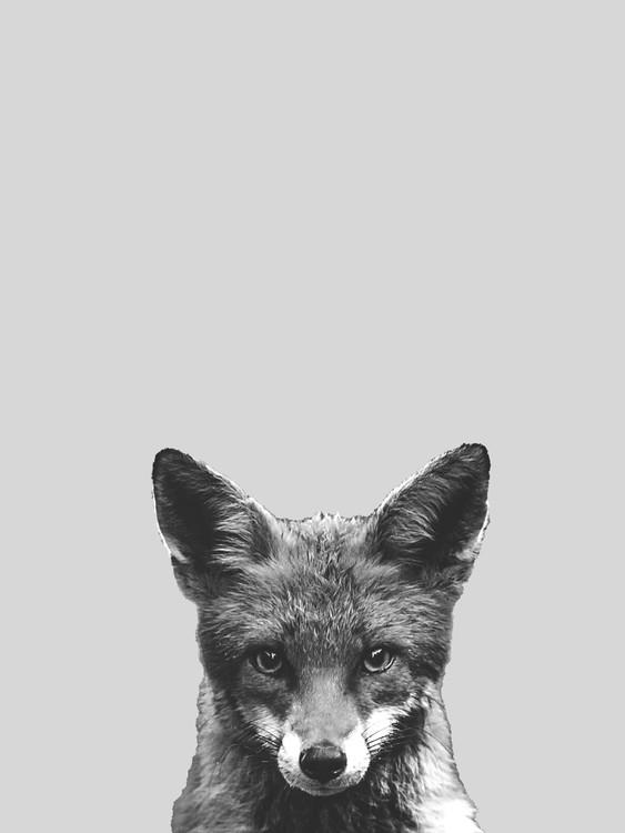 Umělecká fotografie Grey fox