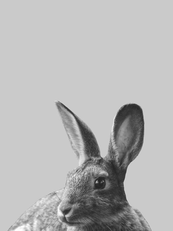 Umelecká fotografia Grey rabbit
