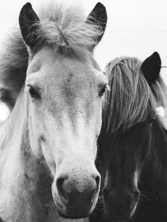 Umělecká fotografie horses