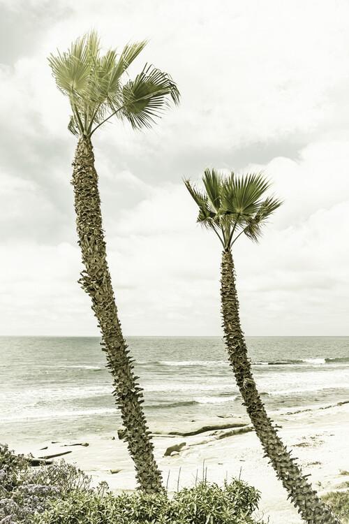 Umělecká fotografie La Jolla palm trees | Vintage