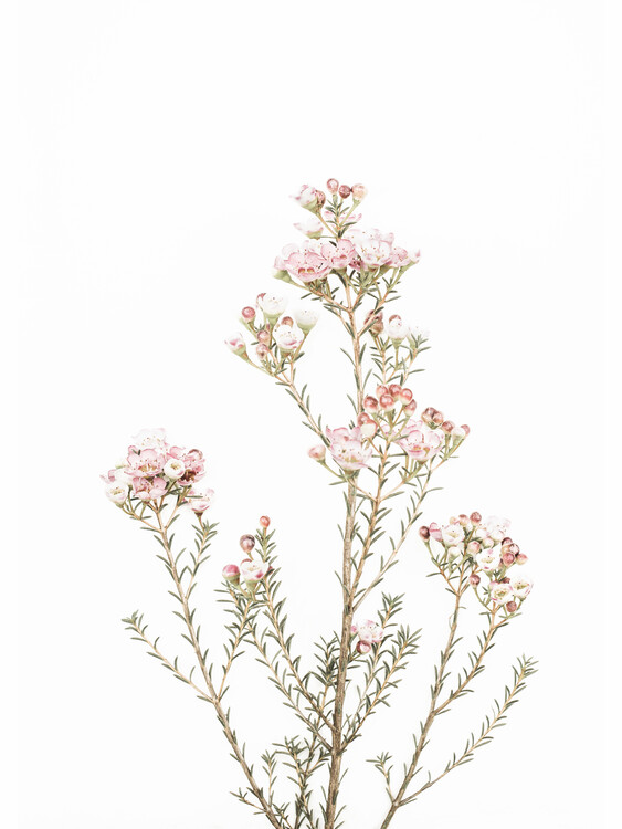Kunstfotografie Little Blooms