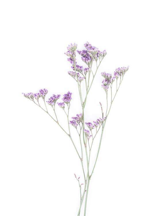 Kunstfotografie Little Floral