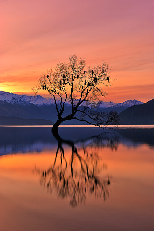 Художествена фотография Lone Tree is not Lonely
