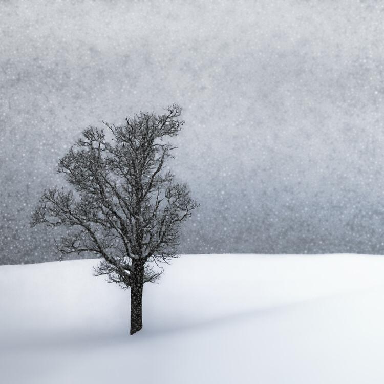 Photographie d'art LONELY TREE Idyllic Winterlandscape