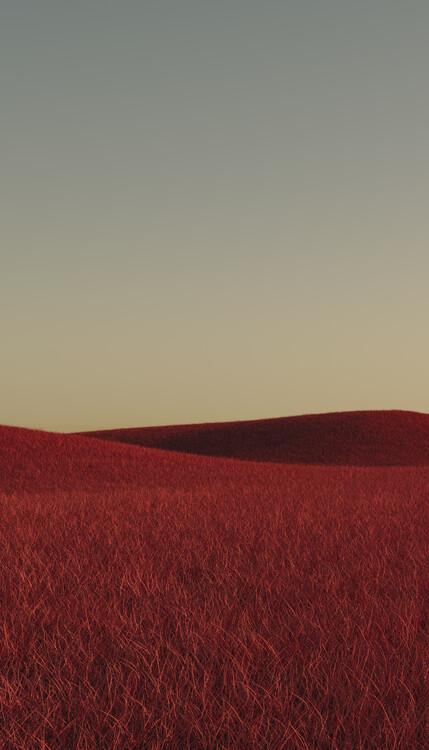 Umjetnička fotografija Minimal landscpases of a red grass at with a gradient sky series 1