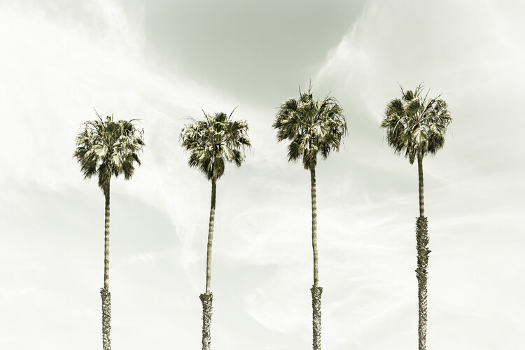 Umělecká fotografie Minimalist Palm Trees | Vintage