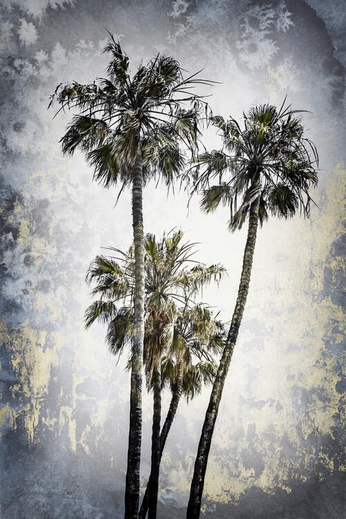 Umělecká fotografie MODERN ART Lovely Palm Trees