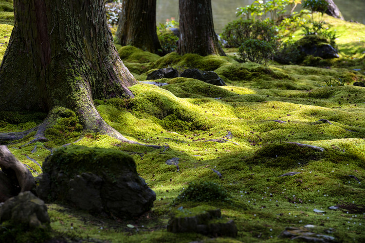 Kunstfotografie Moss Garden