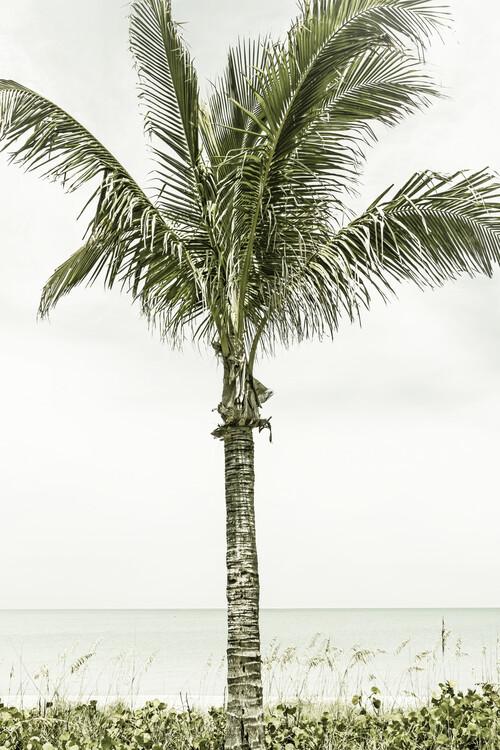 Umělecká fotografie Palm Tree at the beach | Vintage