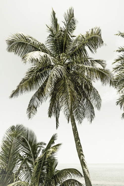 Konstfotografering Palm Trees at the beach | Vintage