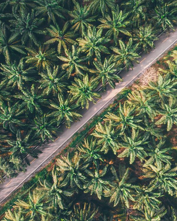 Εκτύπωση τέχνης κατόπιν ζήτησης Palm-Trees