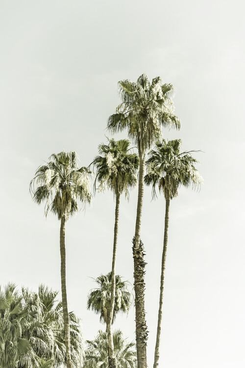 Umělecká fotografie Palm Trees Summertime | Vintage