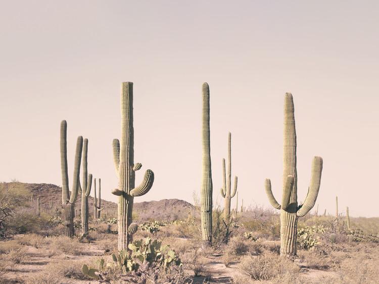 Artă fotografică Pastel Cactus Desert