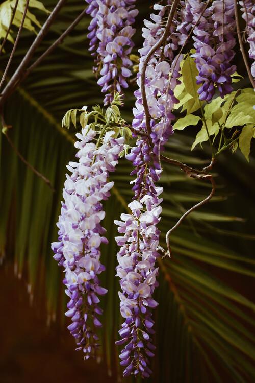 Kunstfotografie Purple rain