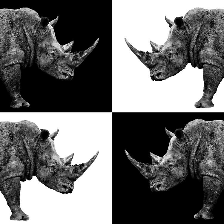 Umělecká fotografie Rhinos