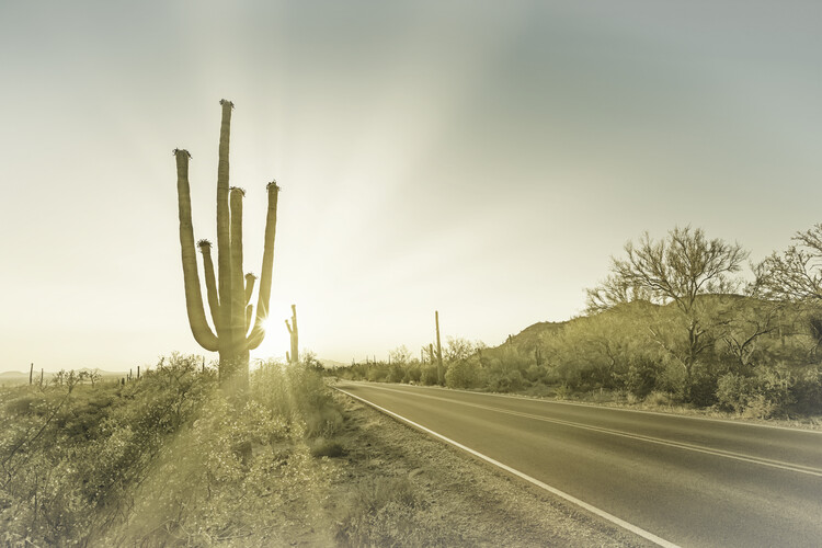 Umělecká fotografie SAGUARO NATIONAL PARK Setting Sun | Vintage