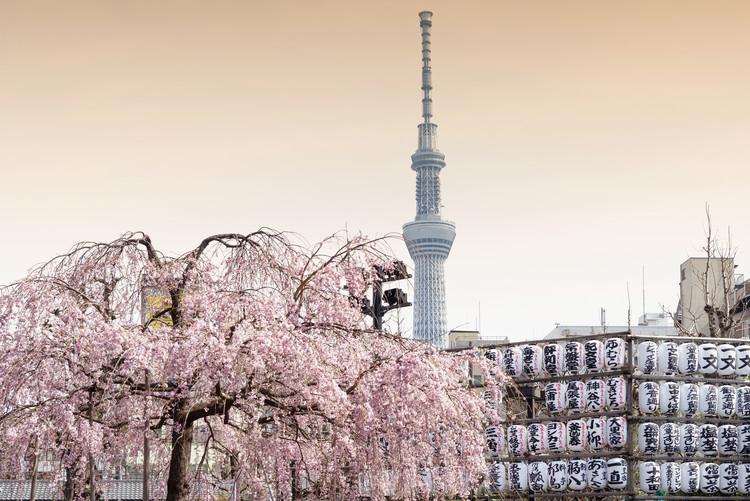 Umělecká fotografie Sakura Tokyo Skytree