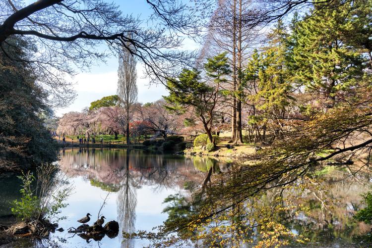 Umelecká fotografia Shinjuku Gyoen Park
