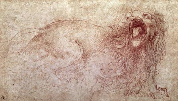 Obrazová reprodukce  Sketch of a roaring lion