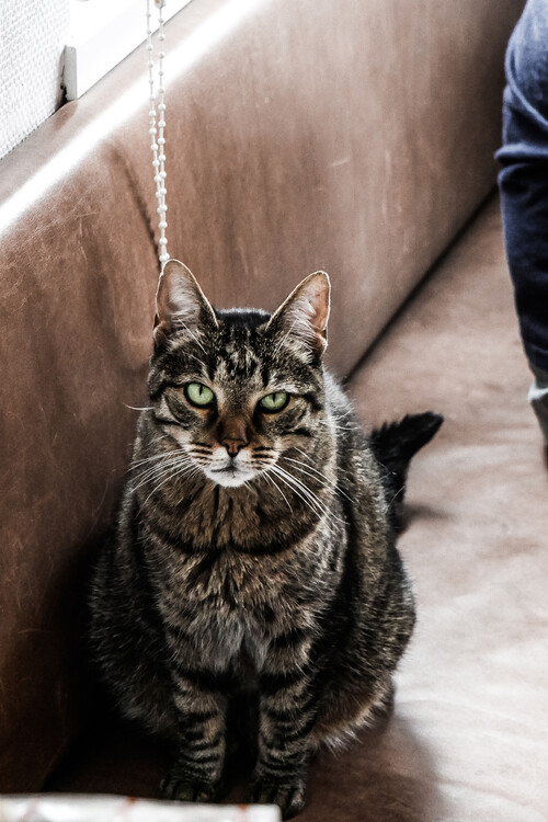Umělecká fotografie Stubborn cat