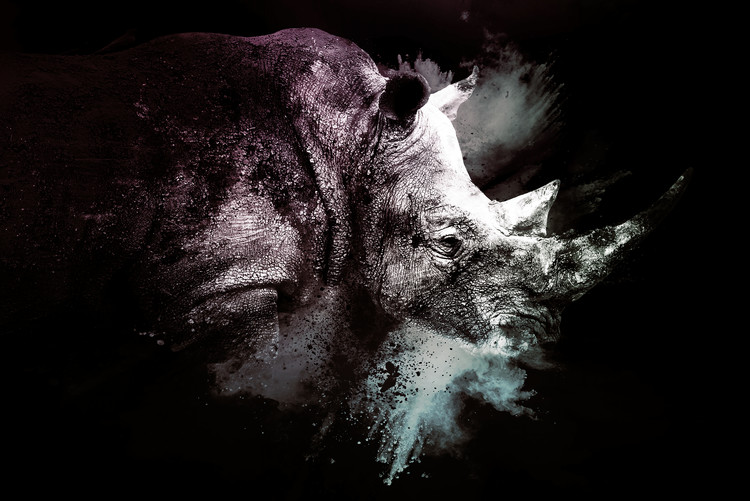 Arte fotográfico The Rhino