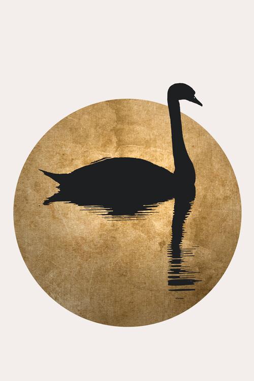 Ilustrace The Swan