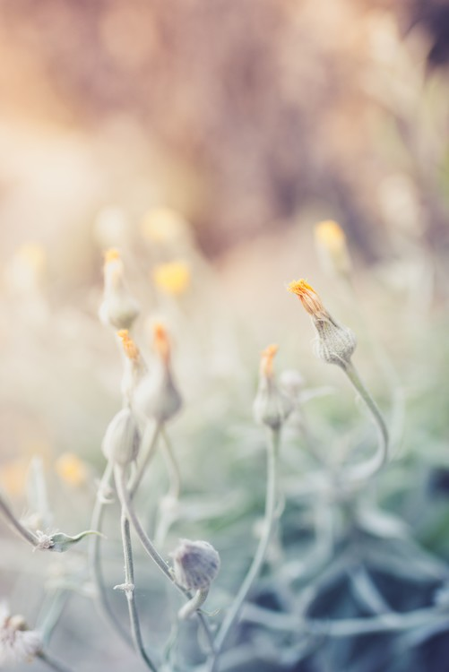 Художествена фотография Tiny flowers at sunset