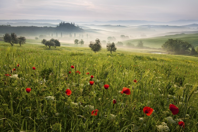 Photographie d'art Tuscan spring