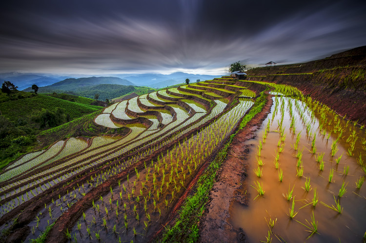 Photographie d'art Unseen Rice Field