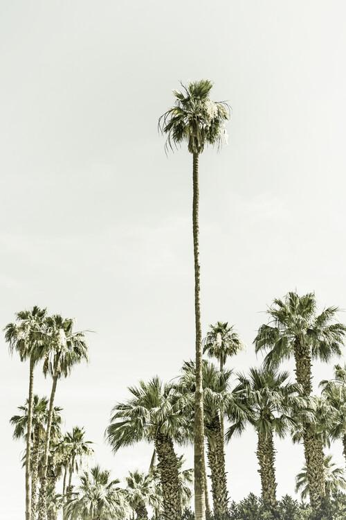 Umělecká fotografie Vintage palm tree  paradise