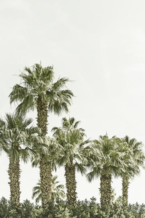 Umělecká fotografie Vintage palm trees at the beach