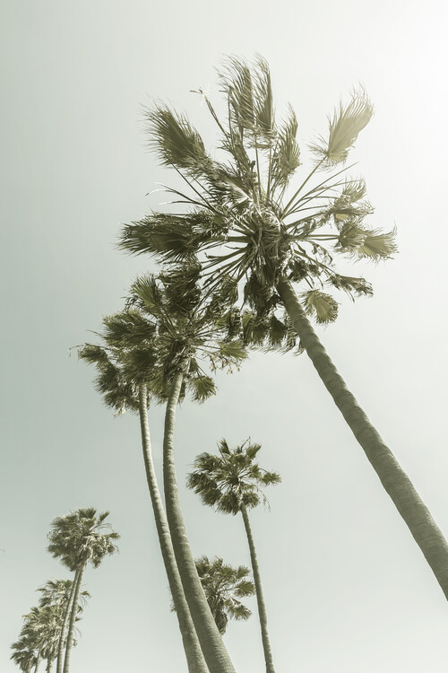 Kunst fotografie Vintage Palm Trees in the sun
