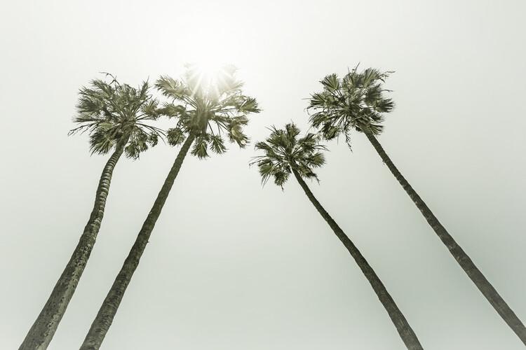 Artă fotografică Vintage palm trees in the sun