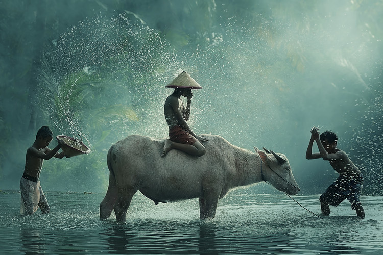 Photographie artistique Water Buffalo