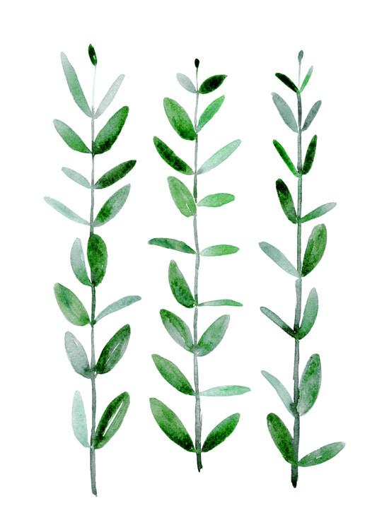 Illustrazione Watercolor eucalyptus parvifolia