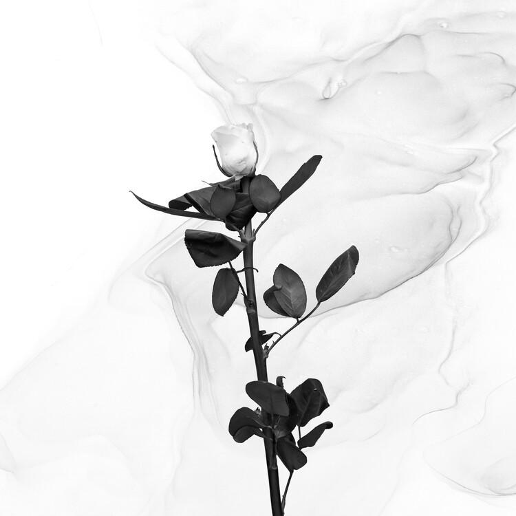 Kunstfotografi White Rose | Liquid Art