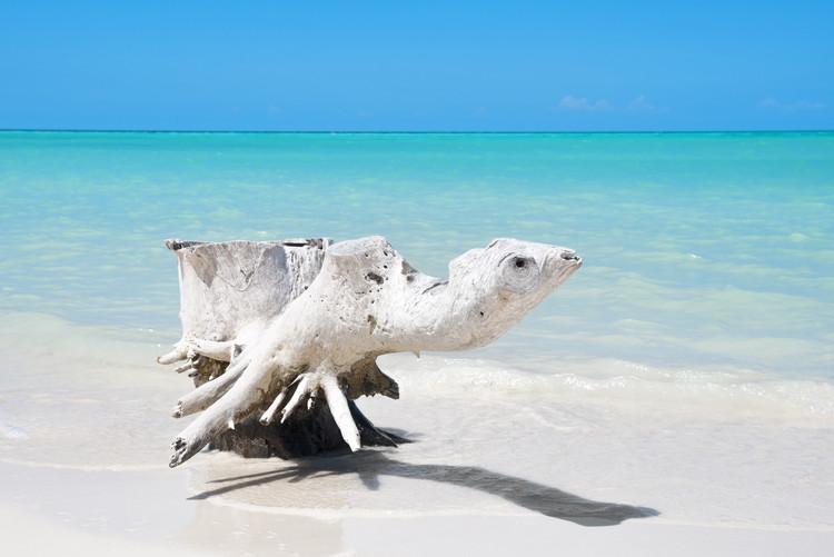 Umelecká fotografia Wooden Turtle on the Beach