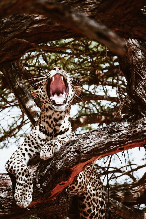 Umělecká fotografie Yawning cat