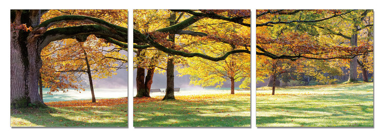Autumn Trees in the Park Modern tavla