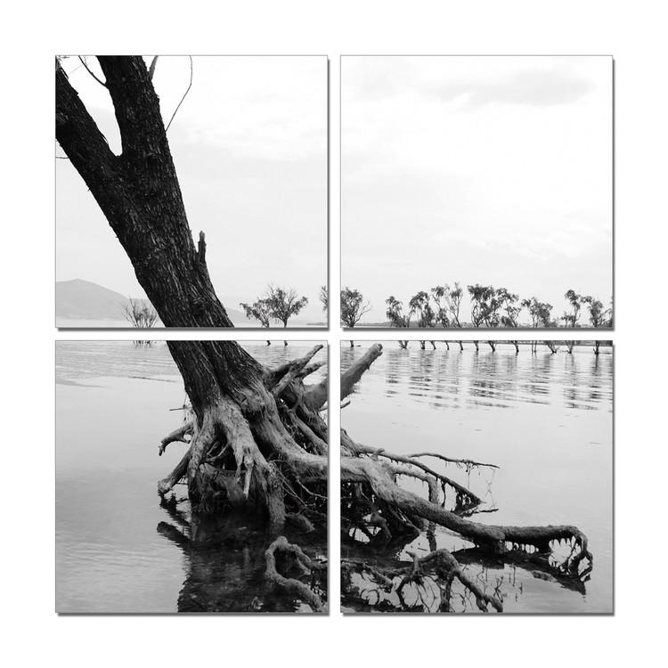 Roots in River Moderne bilde