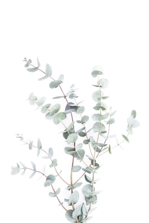 Canvastavla Botanical i