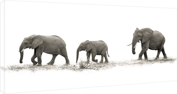 Bilden på canvas Mario Moreno - The Elehants