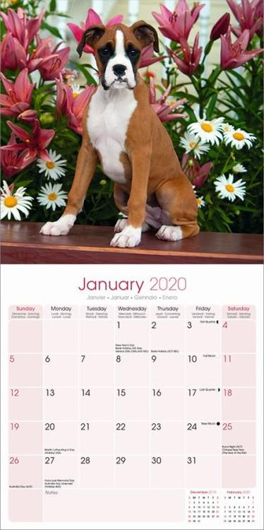 Boxer Calendar 2020