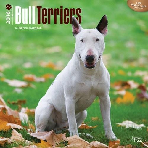 Bull Terriers Calendar 2017