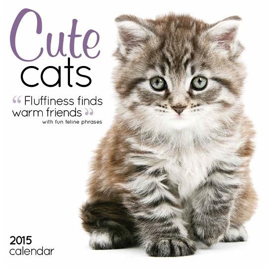 Cute Cats Calendar 2017