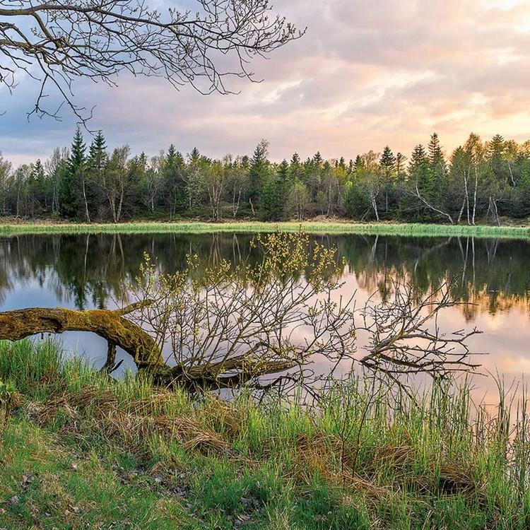 Forest Nature Calendar 2019