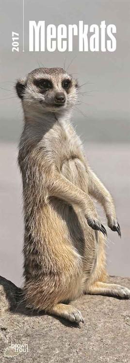 Meerkats Calendar 2020